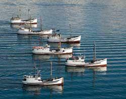 Halibut fleet